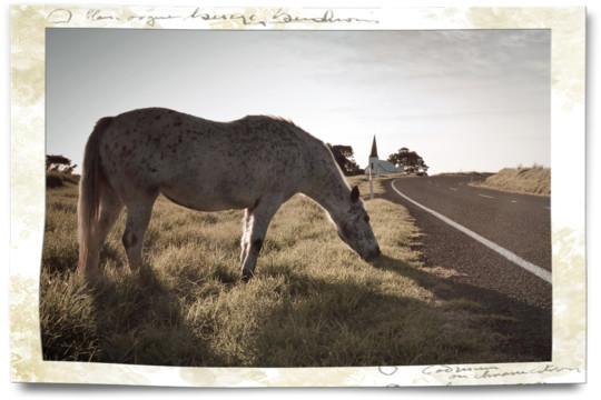 Driving in NZ Raukokore