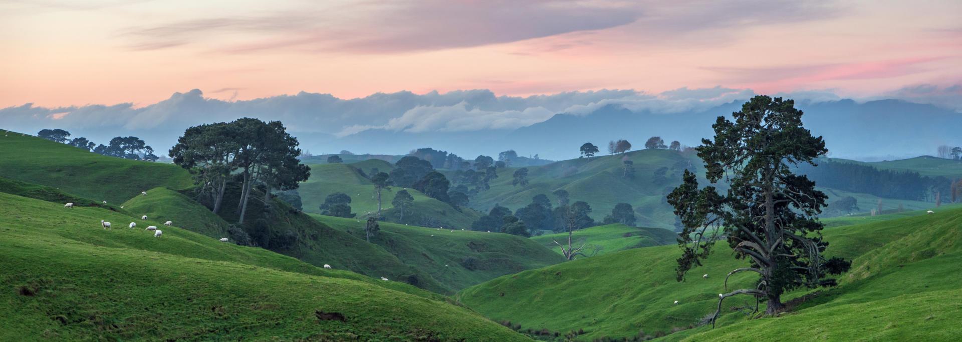 Waikato Rural 01 P